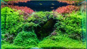 7 Tema Aquascape untuk Inspirasi Dekorasi Apartemenmu